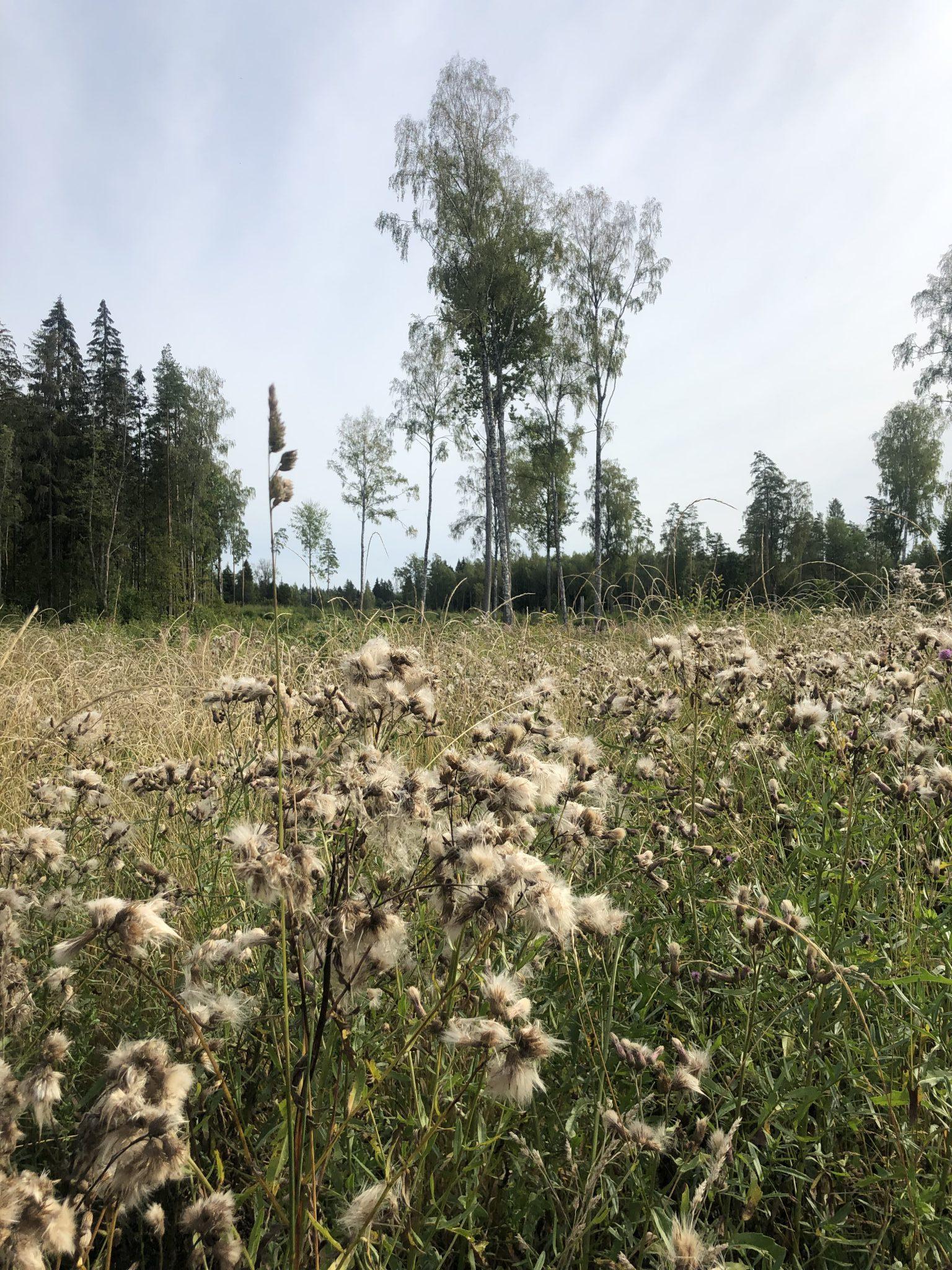 Wildnis in Estland Bäume Wiese und Kraut