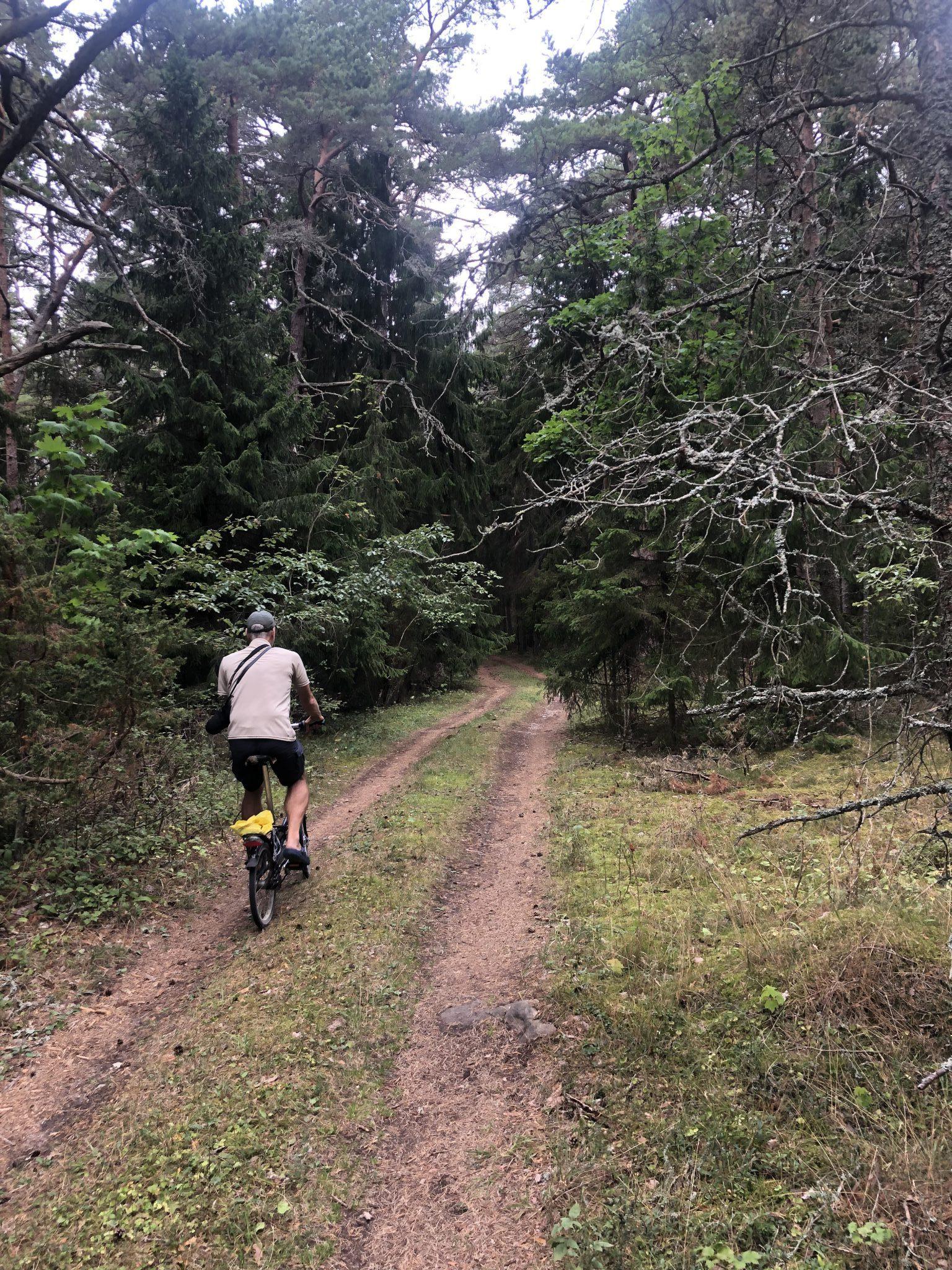 Ein Fahrradfahrer auf einem Waldweg vor dem Dickicht auf der Insel Hiiumaa