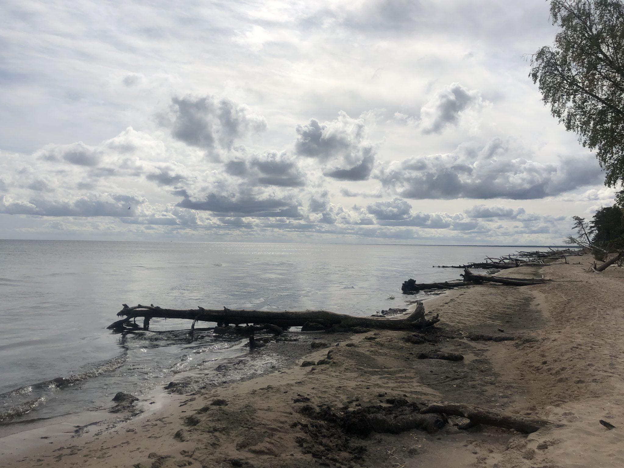 Tote Bäume am Kap Kolka in Lettland