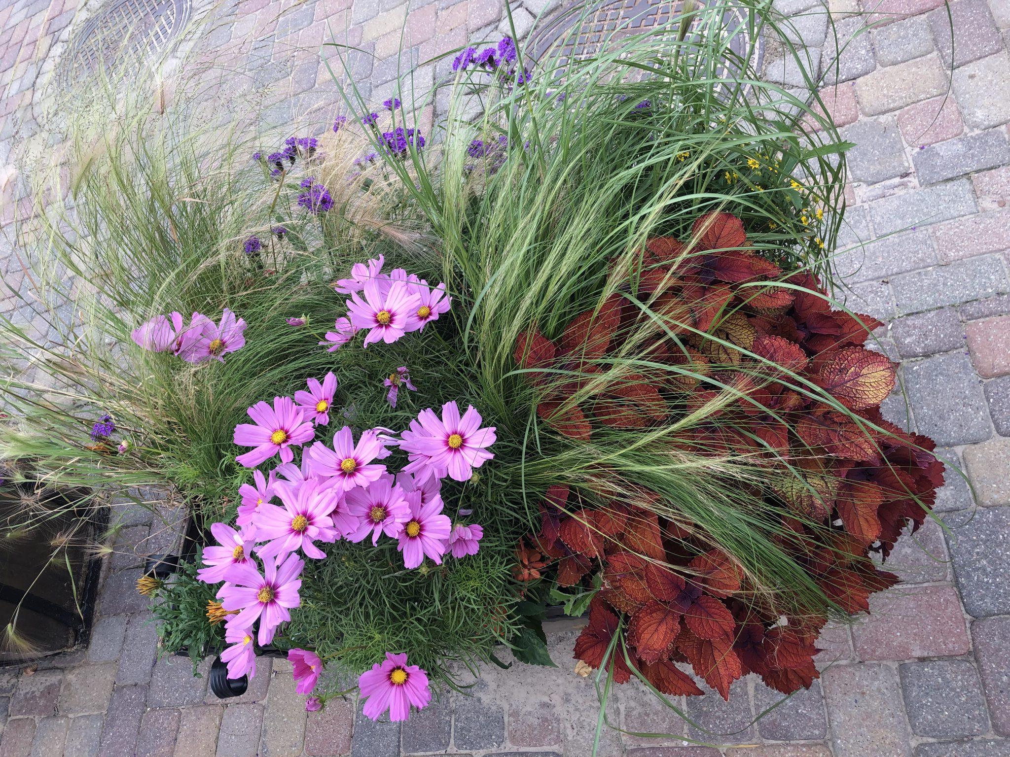 In Kuldīga gibt es sehr viele Blumen Arrangements