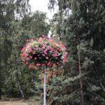 Blumenkranz an einer Sraßenlaterne in Litauen