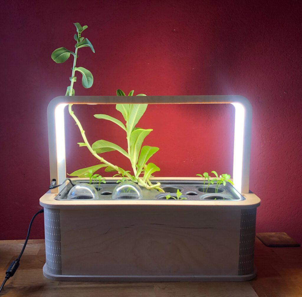 GreenBox Berlin Indoor Garten mit PlantPlugs und LED Beleuchtung